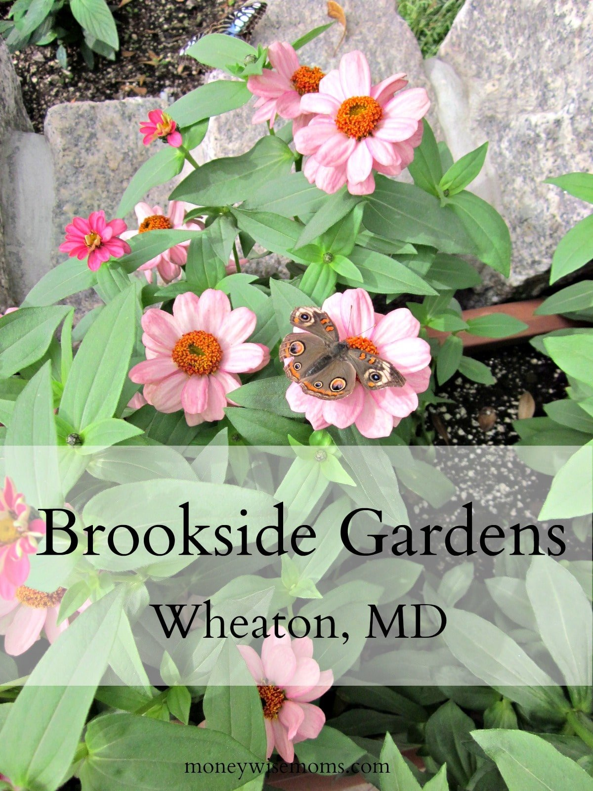Brookside Gardens {Day Trip from DC}