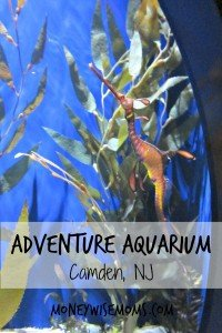 Adventure Aquarium in Camden, NJ (next to Philadelphia) | Fabulous family destination | MoneywiseMoms