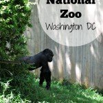 National Zoo (Washington DC)