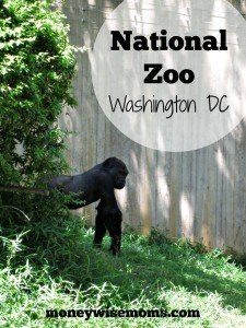National Zoo in Washington DC - fabulous FREE destination for #familytravel - MoneywiseMoms