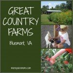 Great Country Farms {Bluemont, VA}