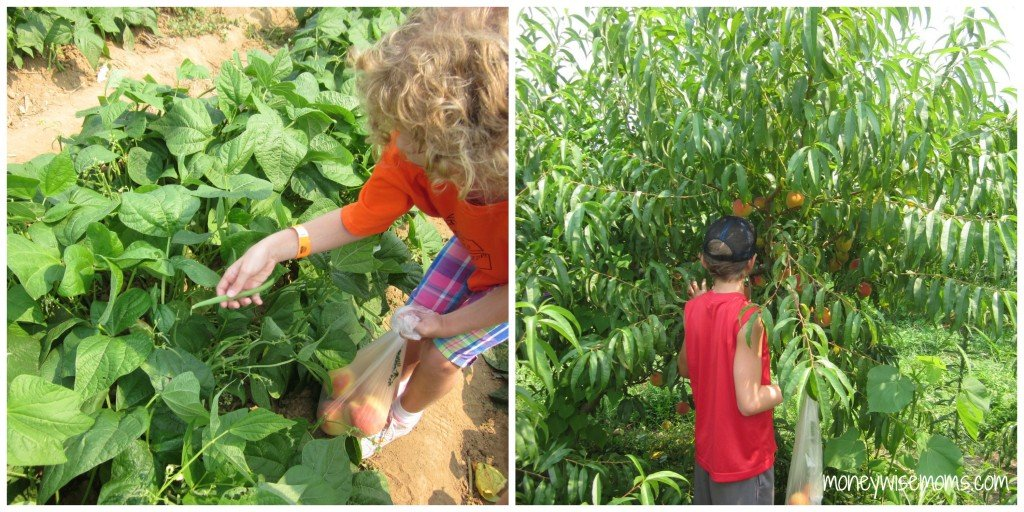 UPick Fruits and Vegetables at Great Country Farms - Bluemont Virginia #familytravel - MoneywiseMoms