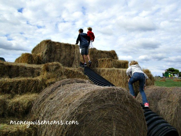Parkouring on Hay Bales at Wayside Farm