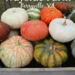Wayside Farm Fun {Berryville, VA}