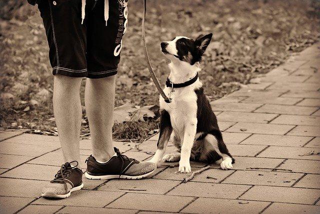 Summer Job Ideas for College Kids - dog walking