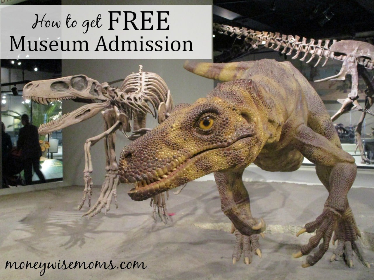How to get free admission to museums