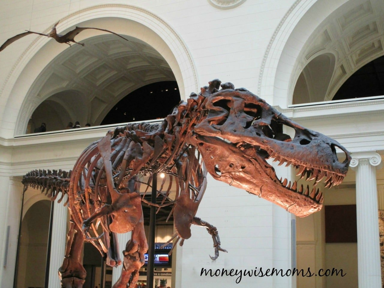 The Field Museum in Chicago Illinois | natural history museum family fun
