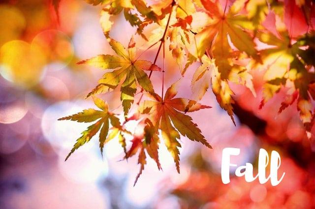 Fall posts from MoneywiseMoms   Holidays and Seasons