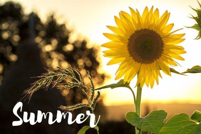 Summer posts from MoneywiseMoms   Holidays and Seasons