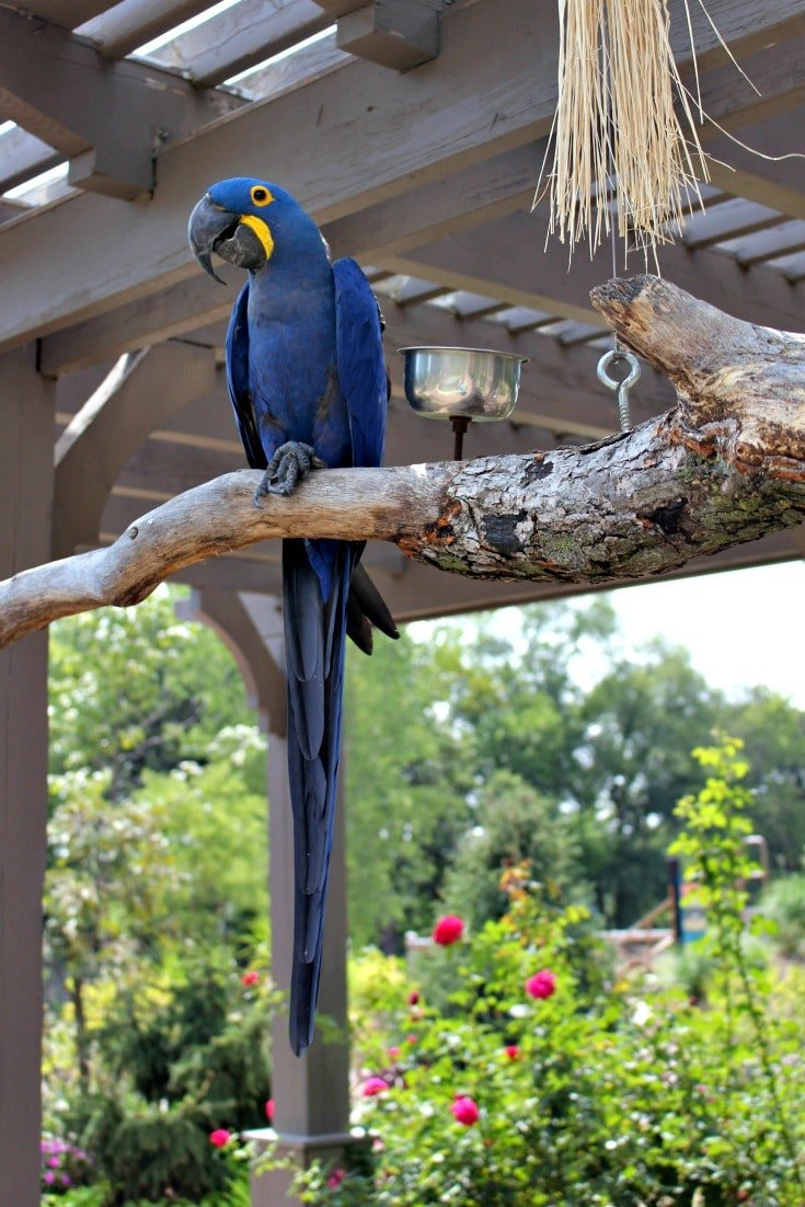 Birdwatching at Henry Doorly Zoo and Aquarium