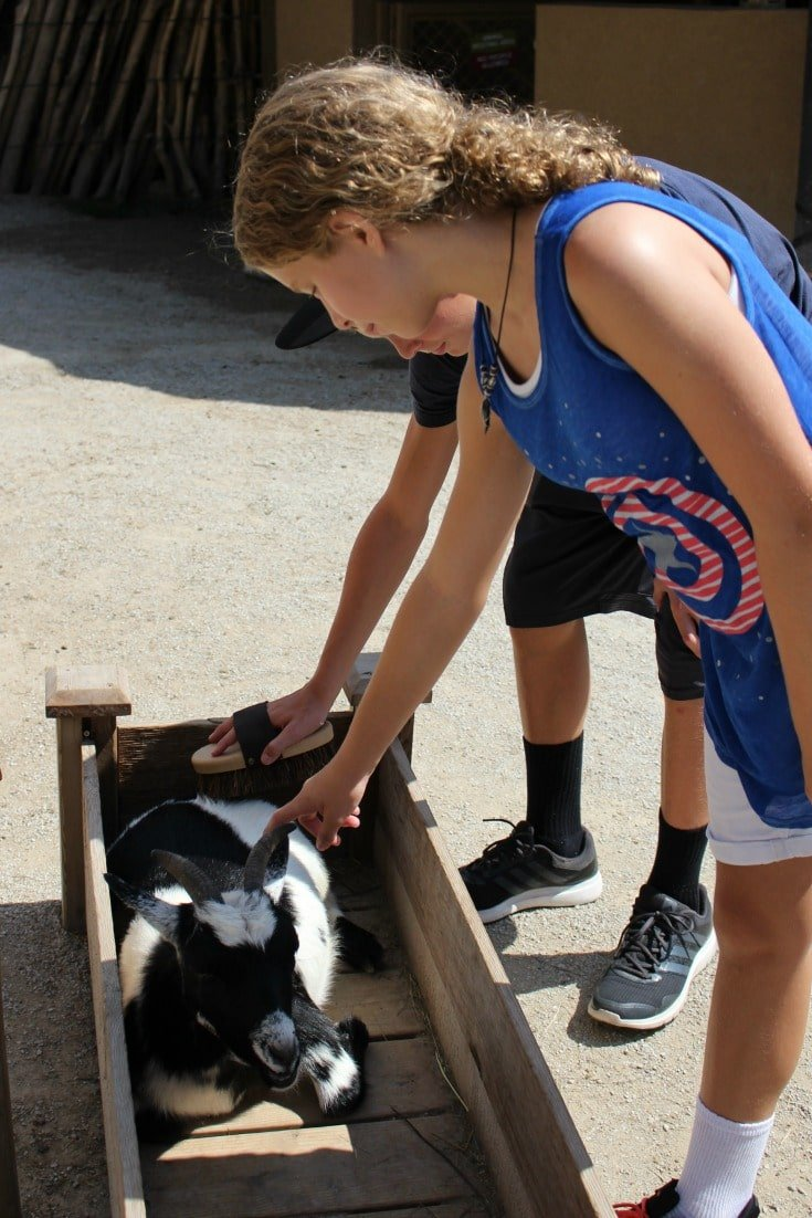 Petting goats at Omaha zoo