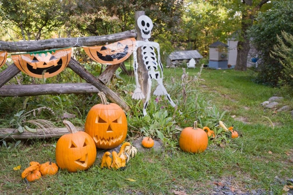 Skeleton and Jack o Lanterns along wooden fence outdoors - Halloween scavenger hunt outdoors
