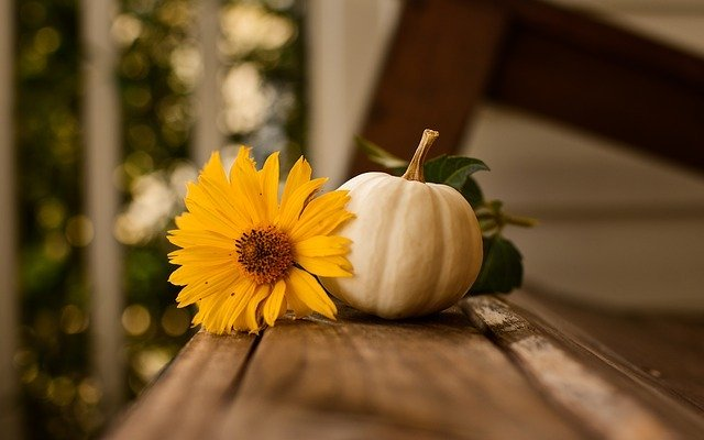 Fall flower with white pumpkin - great gifts for fall birthdays for women