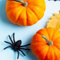 pumpkins and spider on blue background